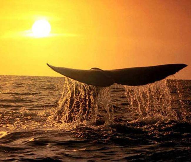 fotos-ballenas