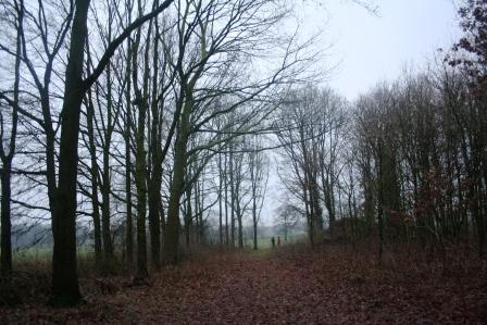Aalten bomen