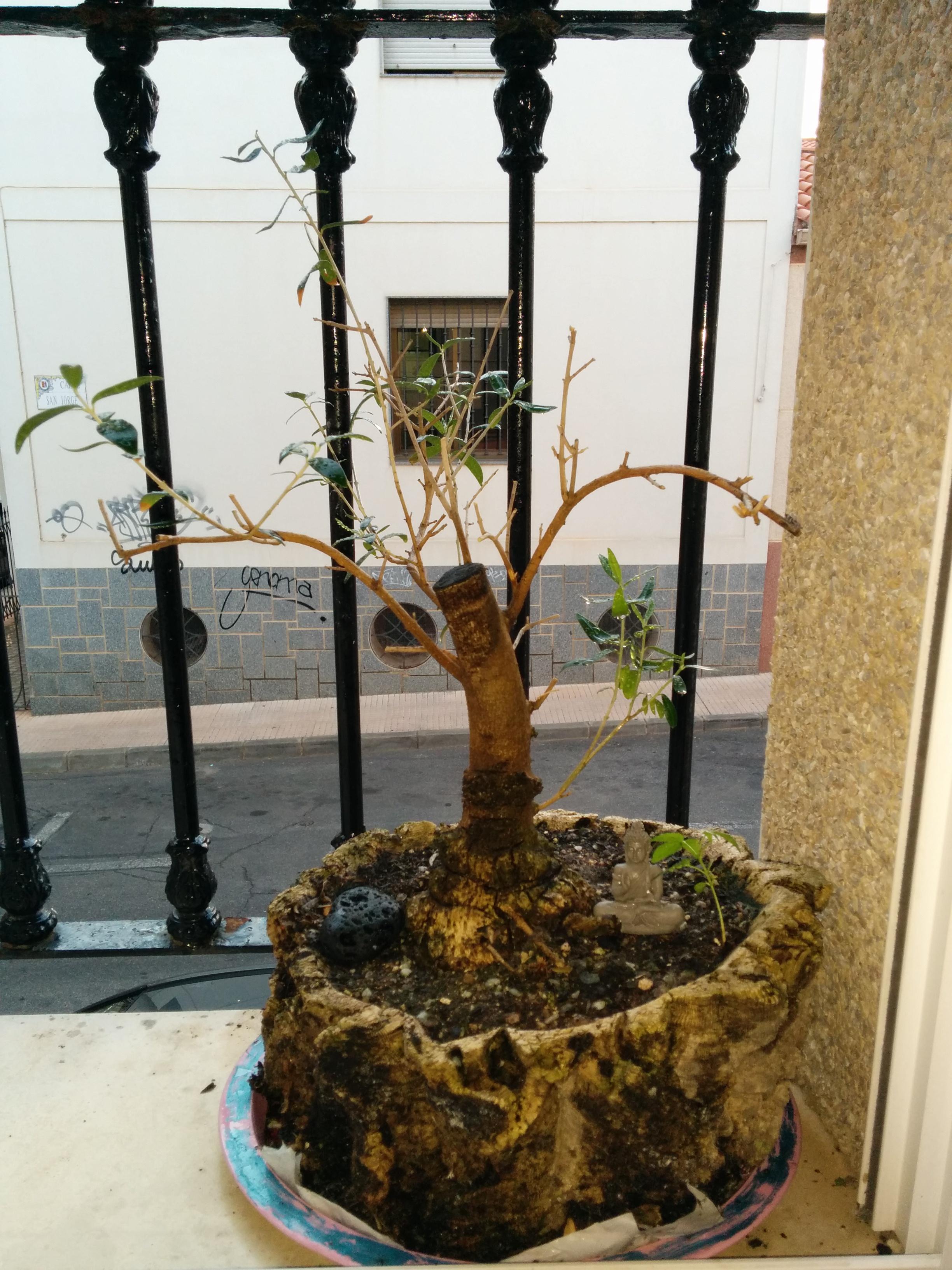 Perdido en la noche t chocolate y caf - Como se cuida un bonsai ...
