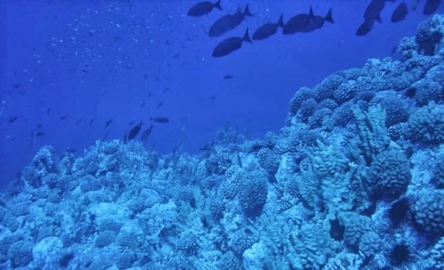 Profundidades-marinas