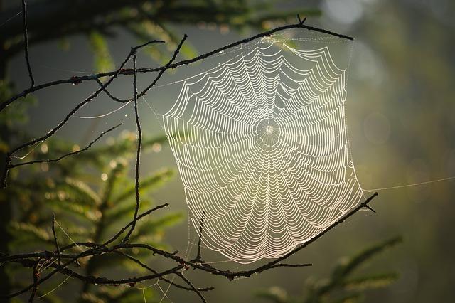 cobweb-4439844_640